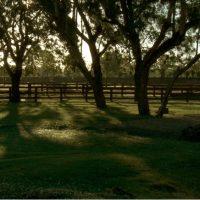 Equestrian Center Sea Horse Ranch fields