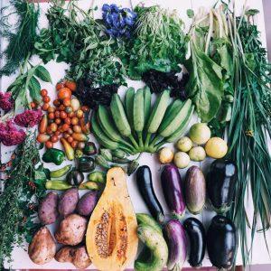 organicgardenseahorseranch