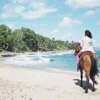 sea-horse-ranch-horse-beach
