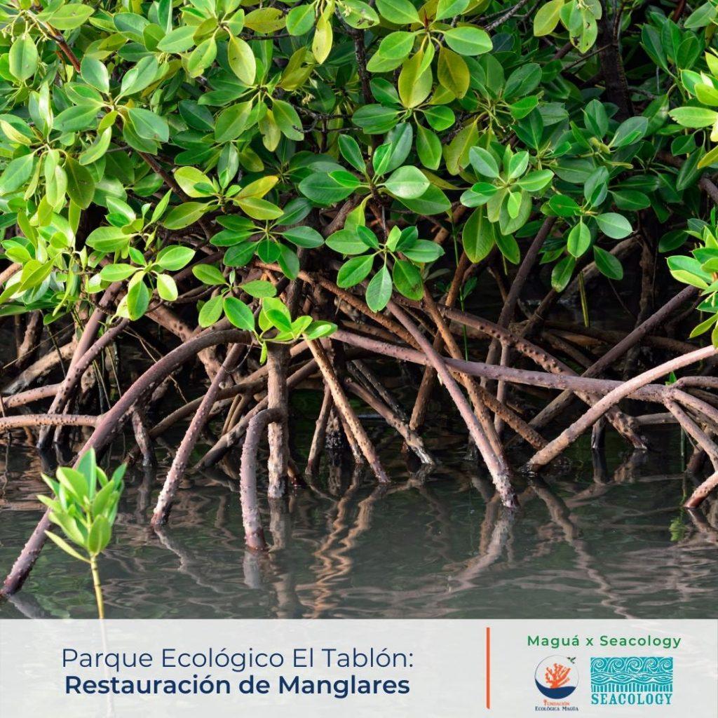 mangoves dominican republic