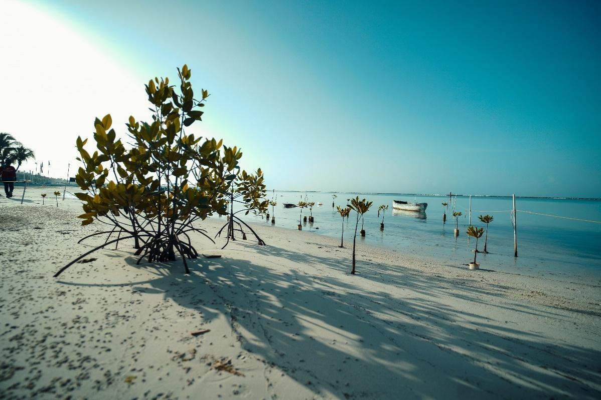 Dominican mangroves